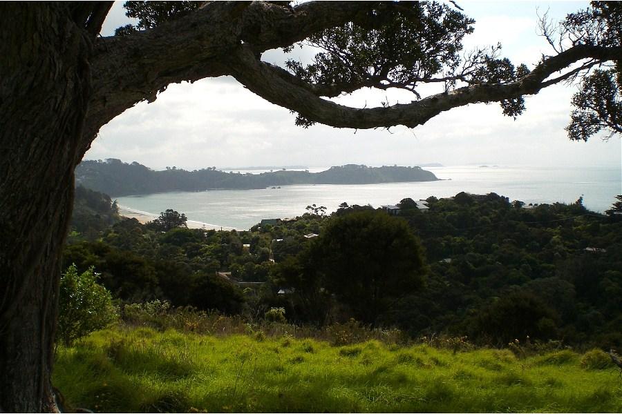 Overlooking Onetangi from Pohutukawa Ridge
