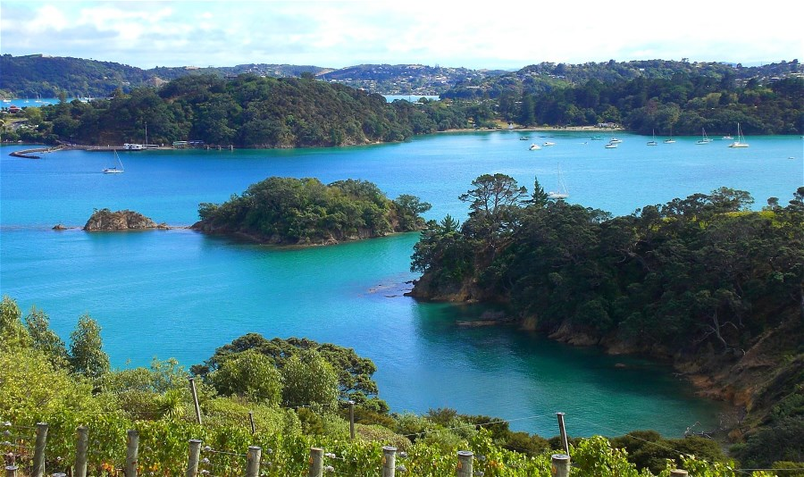 View from outside Te Whau retaurant looking over some of the vineyard and into Putiki Bay