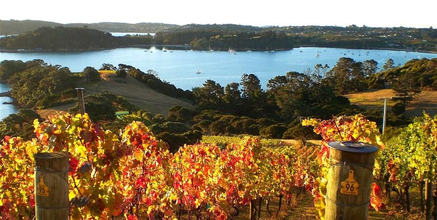 Autumn colours of Te Whau's vineyard.