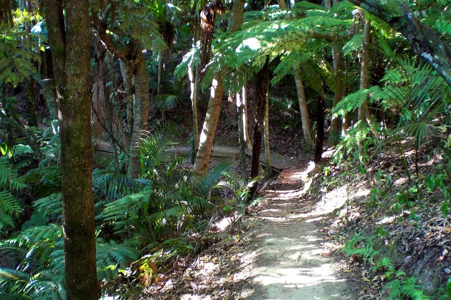 Nikau Walk, Whakanewha
